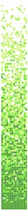 Mozaika Dunin Q Series QG Grade 32.7x261.6 cm